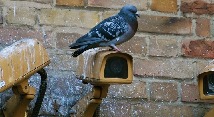 Überwachungskameras an einer Wand, auf einer Kamera sitzt eine Taube